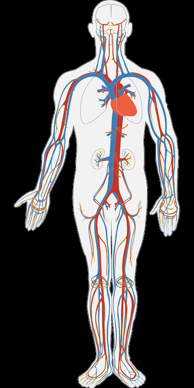 El AOVE ayuda a mantener a raya los problemas vasculares originados por la diabetes mellitus